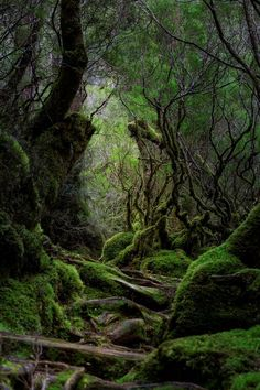 15 Simple Ideas for Forest and Woodland Photography Magical Forest, Beautiful Forest, Woodland Forest, Forest Photography, Landscape Photography, Scenic Photography, Aerial Photography, Night Photography, Landscape Photos