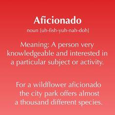 Today's word: aficionado