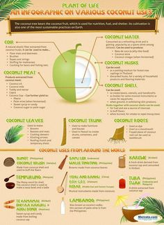 Coconut~ Plant of Life.  The many uses of the coconut plant!