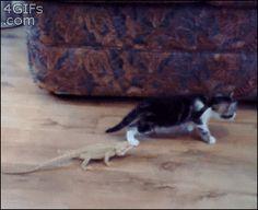 トカゲと猫