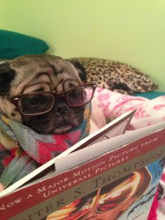 A #dog that likes reading