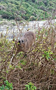 Südafrika, #GARDENROUTE: TSITSIKAMMA NATIONAL PARK.    Kathi berichtet in ihrem Gastbeitrag über den Tsitsikamma National Park auf der Garden Route, einer etwas über tausend Kilometer langen Strecke von Kapstadt nach Port Elizabeth.