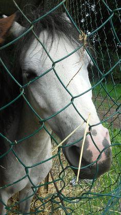 Darling Horses, Animals, Animaux, Horse, Animal, Animales, Animais