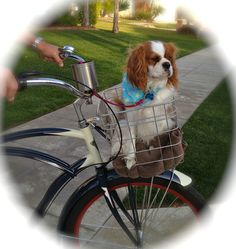 Ahhh so cute I really want a basket like this for Charlie!!