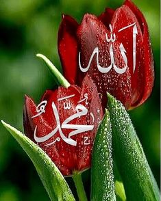"""""""Don& complain about your carpet. Be patient, do not shriek. Beautiful Flowers Wallpapers, Beautiful Nature Wallpaper, Beautiful Roses, Allah Wallpaper, Islamic Quotes Wallpaper, Allah Calligraphy, Islamic Art Calligraphy, Islamic Images, Islamic Pictures"""