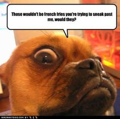 Image result for far side when dogs go to work