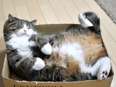 maru--This reminds me of my two cats, Marshall and Wylie!