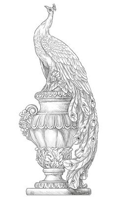 peacock-coloring-pages-for-adults-9.jpg (368×640)