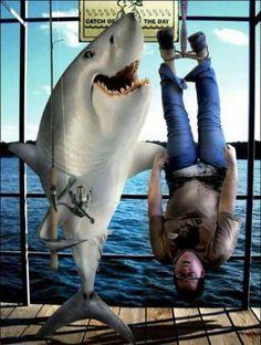 Keep sharks in the ocean!