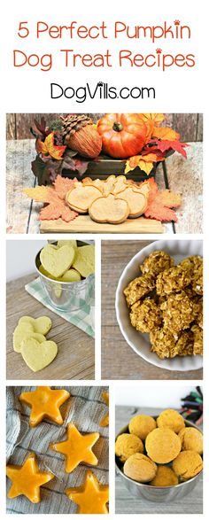 Looking for yummy pumpkin dog treat recipes? Check out 5 of our favorites!