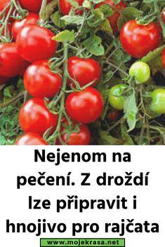 Nejenom na pečení. Z droždí lze připravit i hnojivo pro rajčata Garden Landscaping, Flora, Landscape, Vegetables, Plants, Haha, Vegetable Recipes, Plant, Veggies
