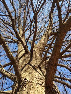 mt. rainier park tree, MD  winter 2011