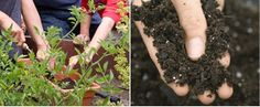 Gardening: Gardening: Compost Don'ts