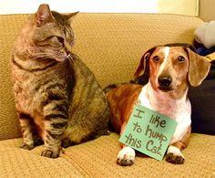 Na endlich zeigen sie sich reumütig, diese Bestien: auf Dogshaming stehen Hunde erstmals zu ihren Verbrechen, wenn auch nicht ganz freiwillig. Ein Online-Hundepranger, wenn man so will – endlich haben Besitzer die Möglichkeit, die Vergehen ihrer treuen Vierbeiner an die Öffentlichkeit zu bringen, besonders schön finde ich natürlich den passend beschämenden Blick der dreisten Köter Hunde. Meine Favos sind ganz... Weiterlesen