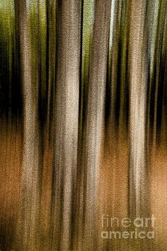 Forest Abstract - Foursome. Vertical panning produces intentional blurring to achieve streaky trees. PS texture filter applied.  Fine Art Photography http://rob-huntley.artistwebsites.com © Rob Huntley