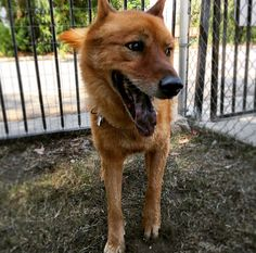 Loma Linda Dog Park at Hulda Crooks Park - Loma Linda, CA - Angus Off-Leash #dogs #puppies #cutedogs #dogparks #lomalinda #california #angusoffleash