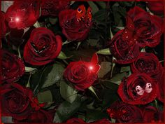 everyday a different color, beautiful gifs, soft goth, nature. images that I like and attract my attention. I hope you'll find images here for your taste too. Beautiful Flowers Pictures, Flower Pictures, Amazing Flowers, Beautiful Roses, Butterfly Lighting, Single Red Rose, Flowers Gif, Red Pictures, Rose Images