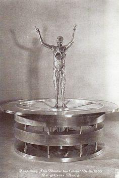 Ausstellung der Gläserne Mensch, 1935.
