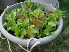 Planting an Herb Garden...in a Pot...on my deck