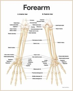 Human anatomy of the human body contains many different systems skeletal system anatomy and physiology ccuart Image collections