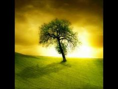 """such a nice :-) Guided Meditation """"The Tree"""" (Official EMDR Release) - YouTube"""
