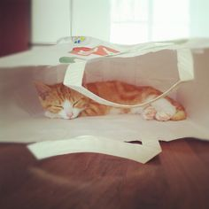 Cat in the bag Cats, Animals, Gatos, Animales, Animaux, Animal, Cat, Animais, Kitty