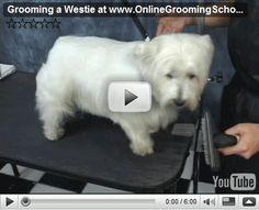 westie grooming dvd