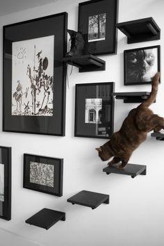 ¡Encuentra ideas variadas y prácticas para escalar paredes de gatos aquí! - ¡Encuentra ideas variadas y prácticas para escalar paredes de gatos aquí! Cat Climbing Wall, Cat Climbing Shelves, Cat Stairs, Gatos Cats, Cat Playground, Cat Room, Pet Furniture, Furniture Market, Furniture Stores