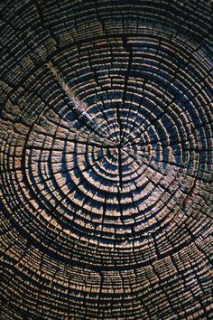 #fractal #nature