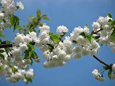 Nakon zime, proleće na severnoj Zemljinoj polulopti stiglo je u nedelju, 20. marta u 5:30 časova jutru.