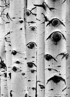 Aspen Eyes Black and White.