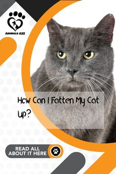 Here's how you can make your cat gain weight. Get more information at AnimalsA2Z.com. Best Cat Food, Kitten Food, Outdoor Cats, Cat Behavior, All About Cats, Cool Cats, Gain, Kittens, Pets