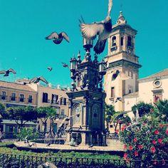 Plaza Alta. Algeciras