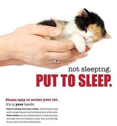 Not sleeping.  Put to sleep.  Spay and neuter! Animal welfare euthanasia