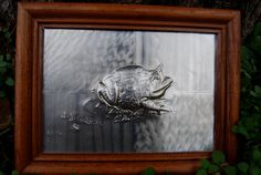 bullfrog  Horned Toad    Ceratophrys by JJgaliciaMetalRelief, $25.00 The lines of this fantastic creature are trapped in the relief of the metal to give body and life .... be a very special gift for that person with a unique style .. or to be put in the place of your home.  Now on Etsy
