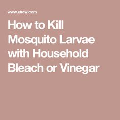 Best 25 Mosquito Larvae Ideas On Pinterest What Do