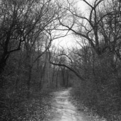 Trail to Bachelors Grove in Chicago...love me some haunted cemeteries :)