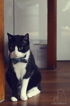 Smo #cat #hipster #like a sir