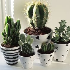 Plants Cactus Bedroom plants Cactus plants Succulents House plants Plants In Bedroom Aesthetic 56 Ideas plants Decoration Cactus, Decoration Plante, Cacti And Succulents, Potted Plants, Indoor Plants, Indoor Cactus, Pots For Plants, Propagate Succulents, Porch Plants