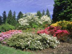 Azalea Way, Washington Park Arboretum, Seattle