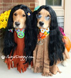 http://www.augiedoggy.com -- Halloween hippies!  That's Augie on the left, and Ti on the right.  Available as a greeting card in our shop!  http://www.zazzle.com/AugieDoggystore*