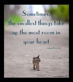 Sometimes,  the smallest things take  up the most room in  your heart                 -Winnie the Pooh