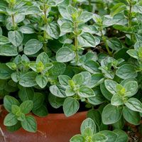 Oregano - wonderful article on growing and using herbs from the wonderful people at Birds and Blooms Magazine