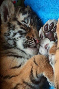 Sweet little big kitty.....still has squshy bean toes!!