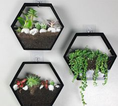 Modern, geometrical wall planter brightens any walls. Perfect for English Ivy, Philodendron and String of Pearls.Material: AcrylicQuantity: 1 (does not come with the plant)Colors: White or BlackSize: (approx. House Plants Decor, Plant Decor, Hanging Wall Planters, 3d Quilling, Plant Wall, Home Decor Furniture, Plant Hanger, Decoration, Flower Pots
