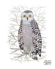 snowy owl bird art giclee print