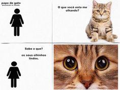 gatos tirinhas