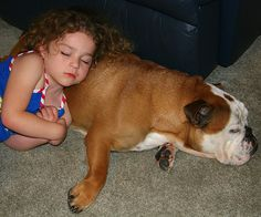 The Best Family Dogs – 10 Breeds For Homes With Children   Dog ...