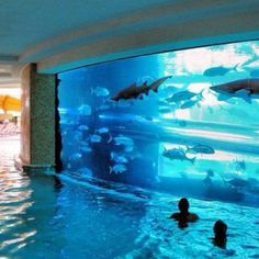 So cool! Aquarium pool