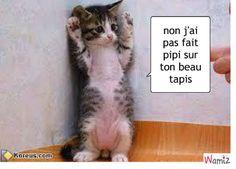 petit chaton qui avoue sa bêtise , lolcats réalisé sur Wamiz